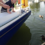 Feeding posh Suffolk ducks